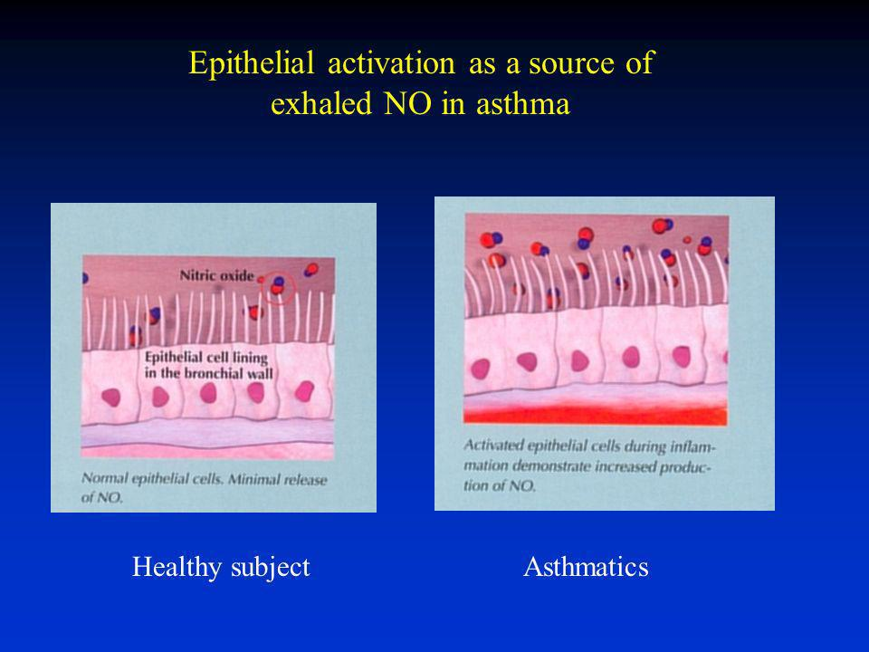 Epithelial activation as a source of exhaled NO in asthma