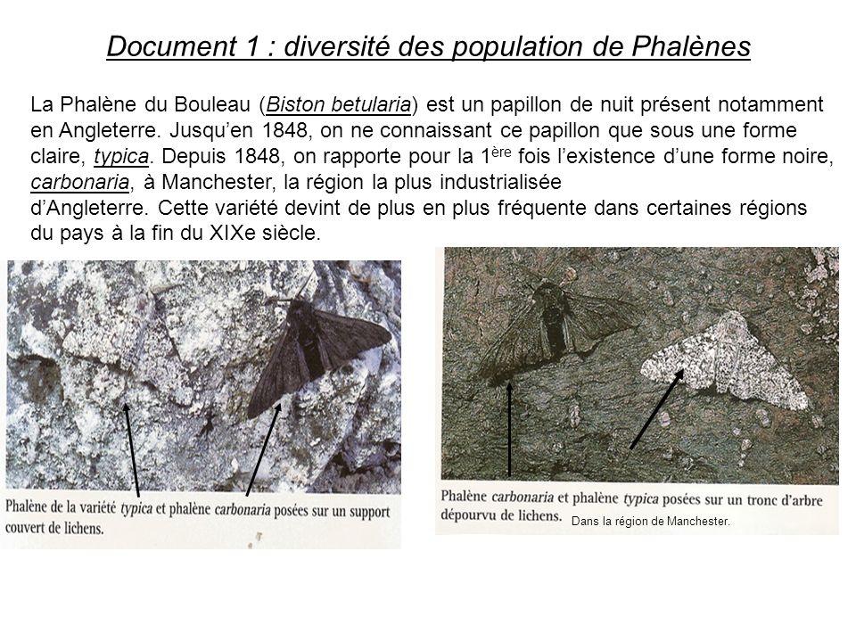 Document 1 : diversité des population de Phalènes