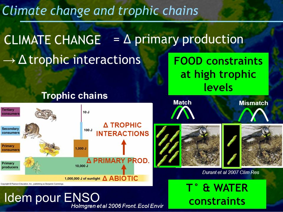 Climate change and trophic chains