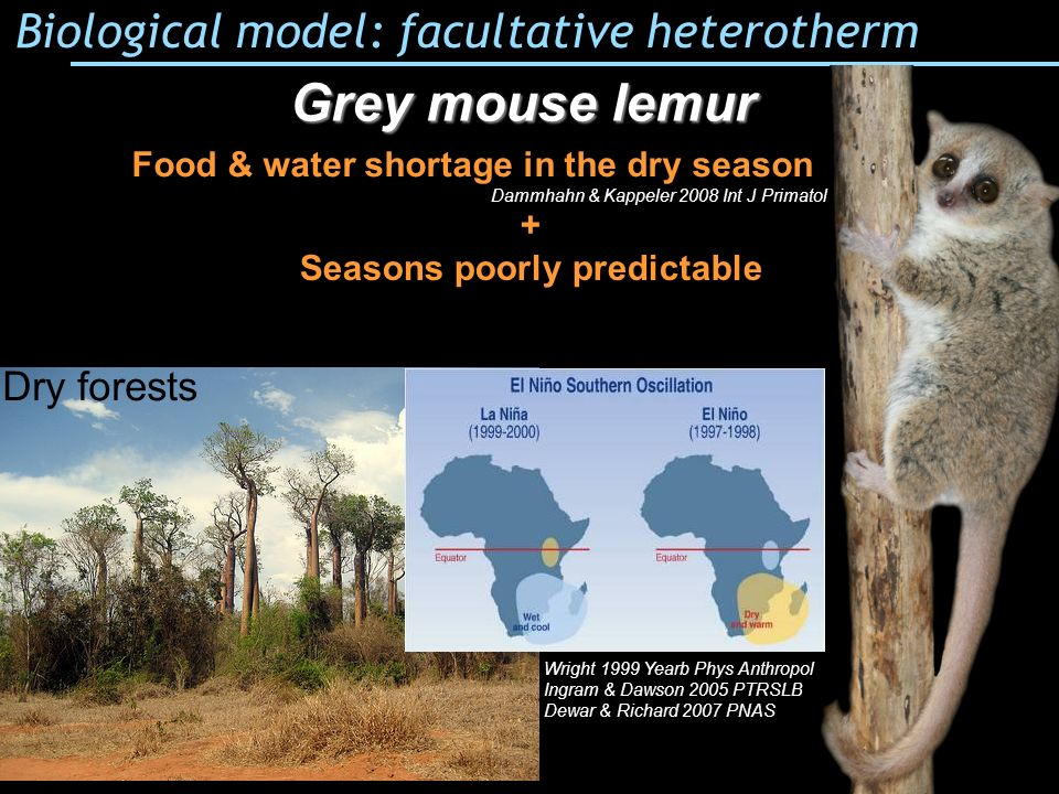 Food & water shortage in the dry season Seasons poorly predictable