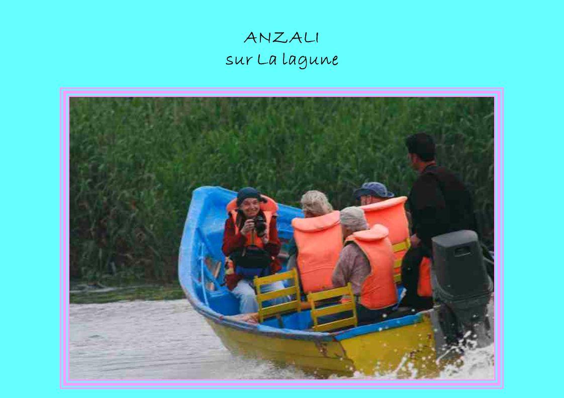 ANZALI sur La lagune