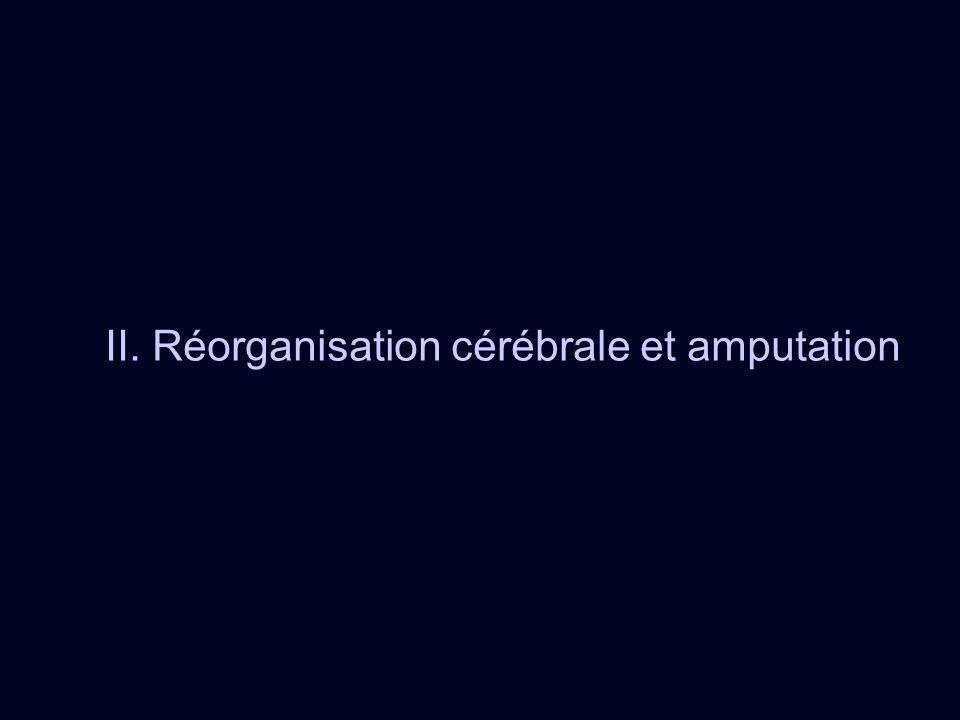 II. Réorganisation cérébrale et amputation