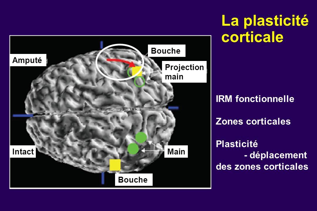 La plasticité corticale