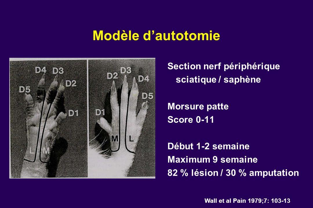 Modèle d'autotomie Section nerf périphérique sciatique / saphène