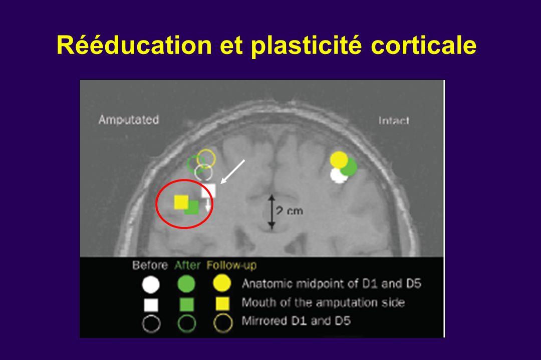 Rééducation et plasticité corticale