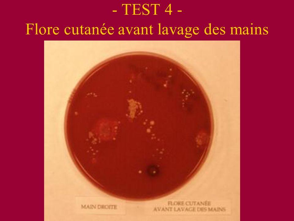 - TEST 4 - Flore cutanée avant lavage des mains