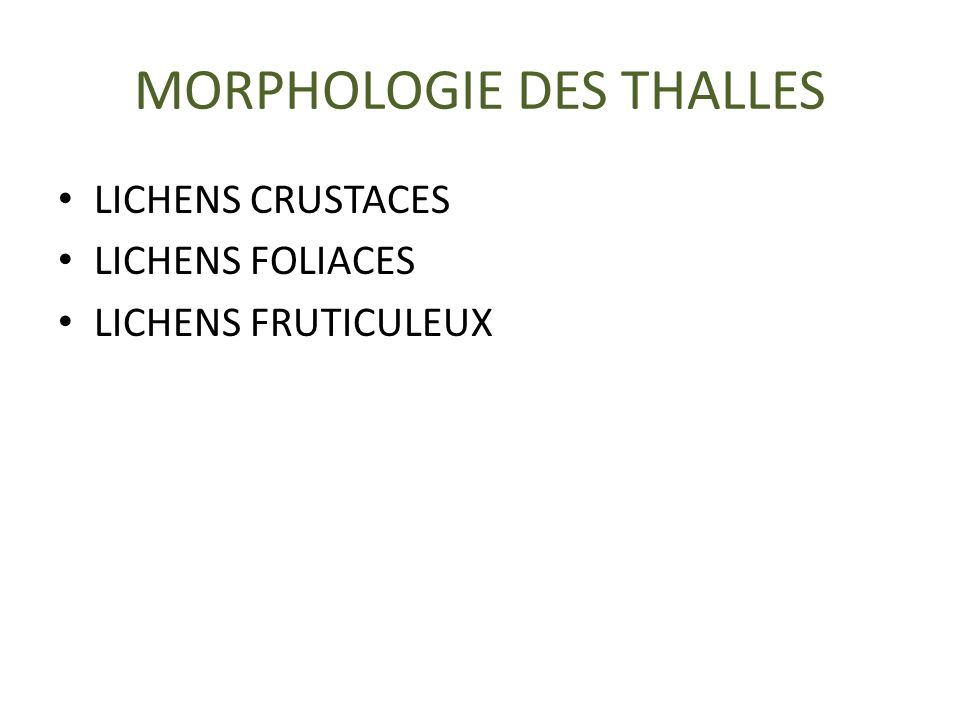 MORPHOLOGIE DES THALLES