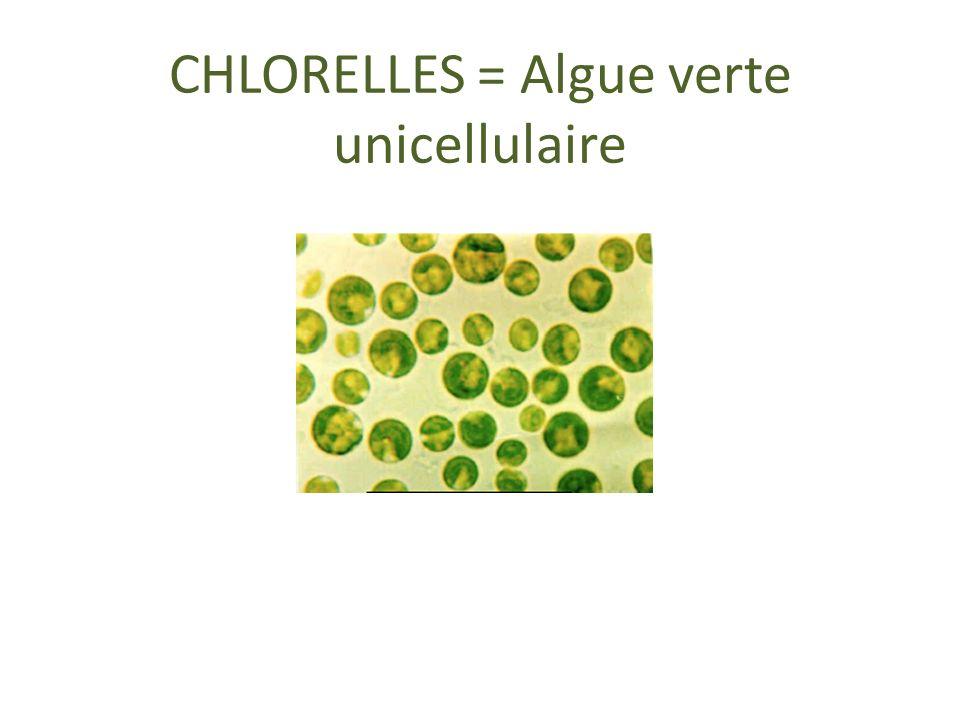 CHLORELLES = Algue verte unicellulaire
