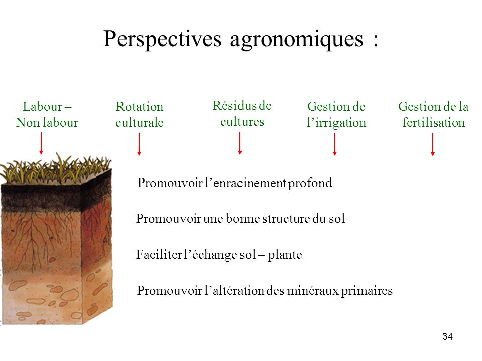 Perspectives agronomiques :