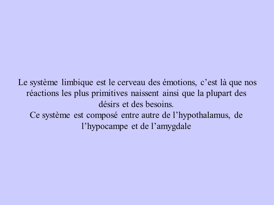 Le système limbique est le cerveau des émotions, c'est là que nos réactions les plus primitives naissent ainsi que la plupart des désirs et des besoins.