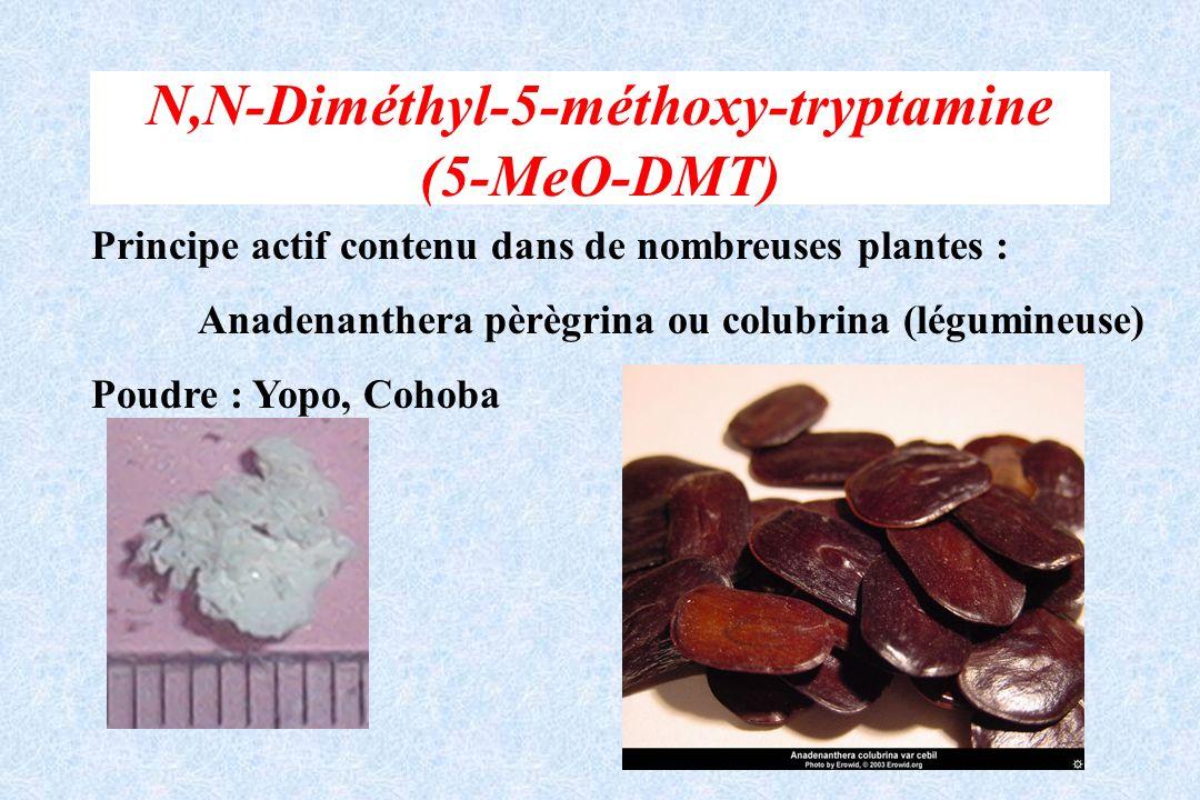 N,N-Diméthyl-5-méthoxy-tryptamine (5-MeO-DMT)
