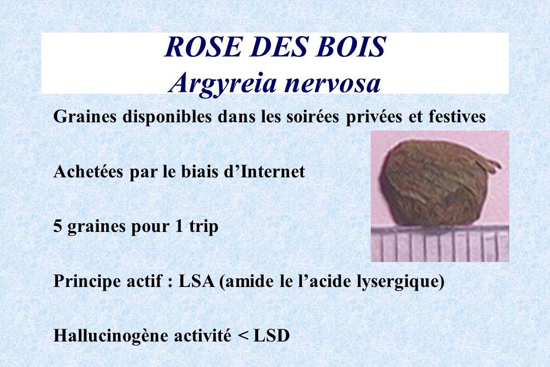 ROSE DES BOIS Argyreia nervosa