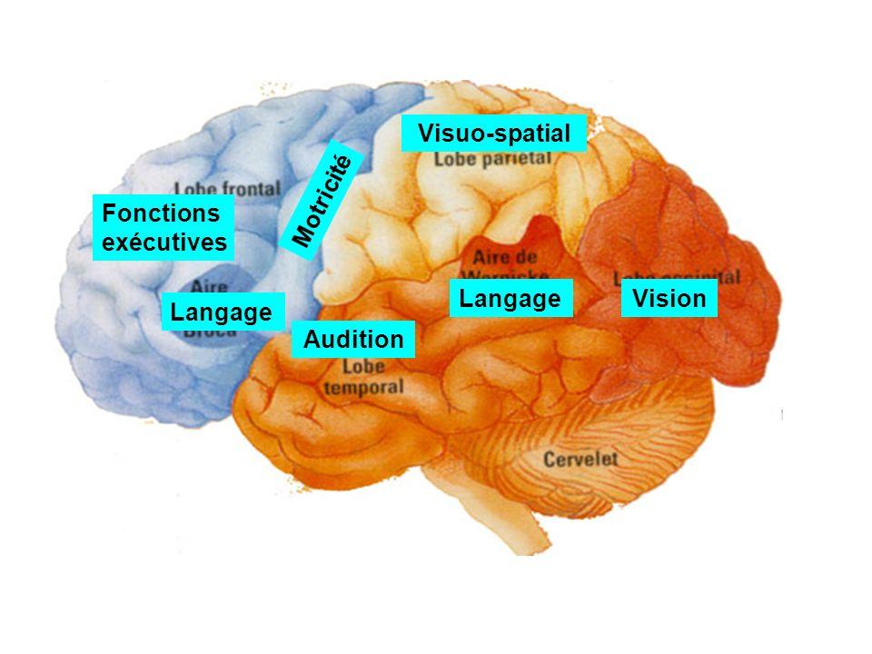 Visuo-spatial Motricité Fonctions exécutives Langage Vision Langage Audition