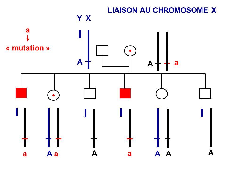 LIAISON AU CHROMOSOME X