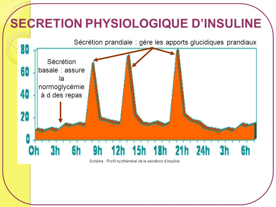 SECRETION PHYSIOLOGIQUE D'INSULINE