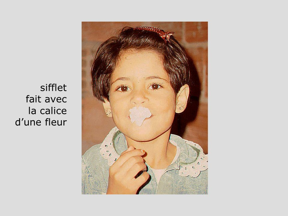 sifflet fait avec la calice d'une fleur