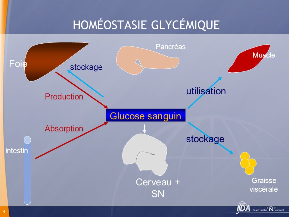 HOMÉOSTASIE GLYCÉMIQUE