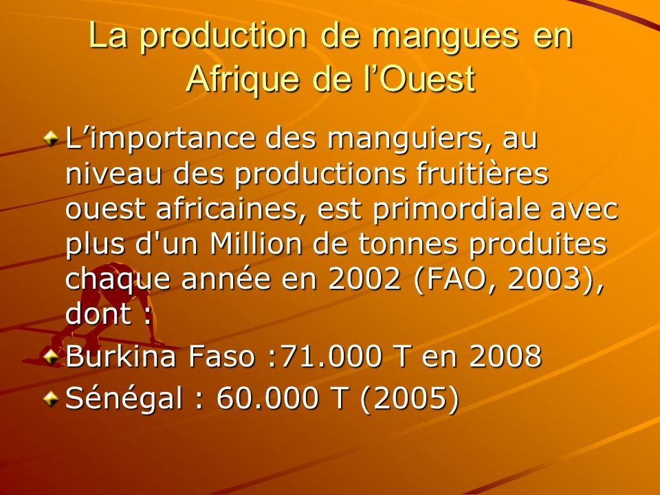 La production de mangues en Afrique de l'Ouest