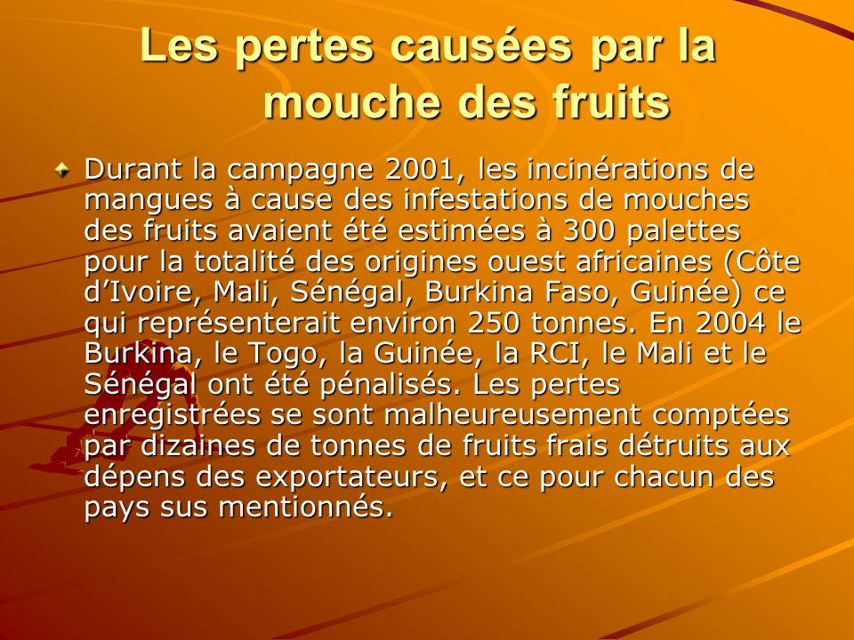 Les pertes causées par la mouche des fruits