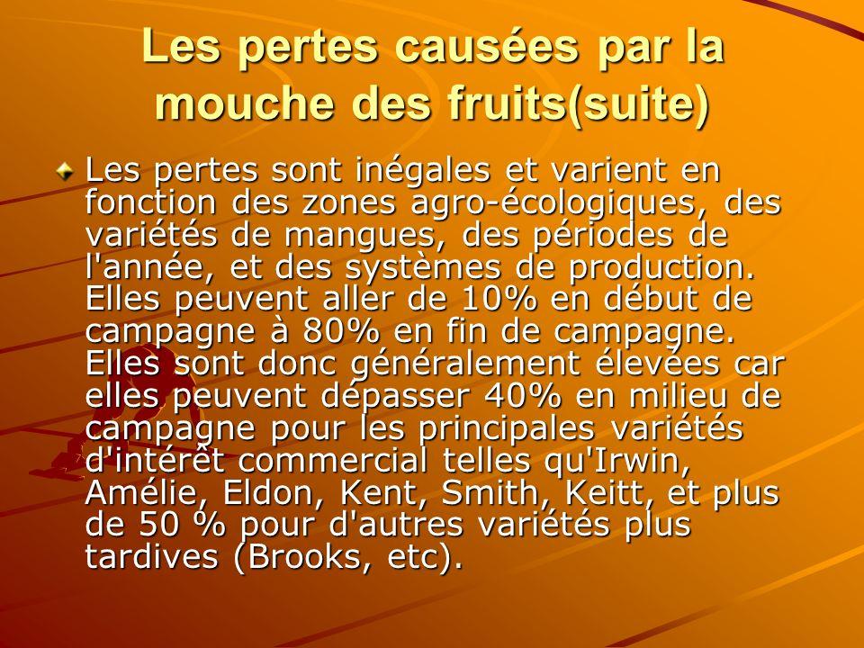 Les pertes causées par la mouche des fruits(suite)