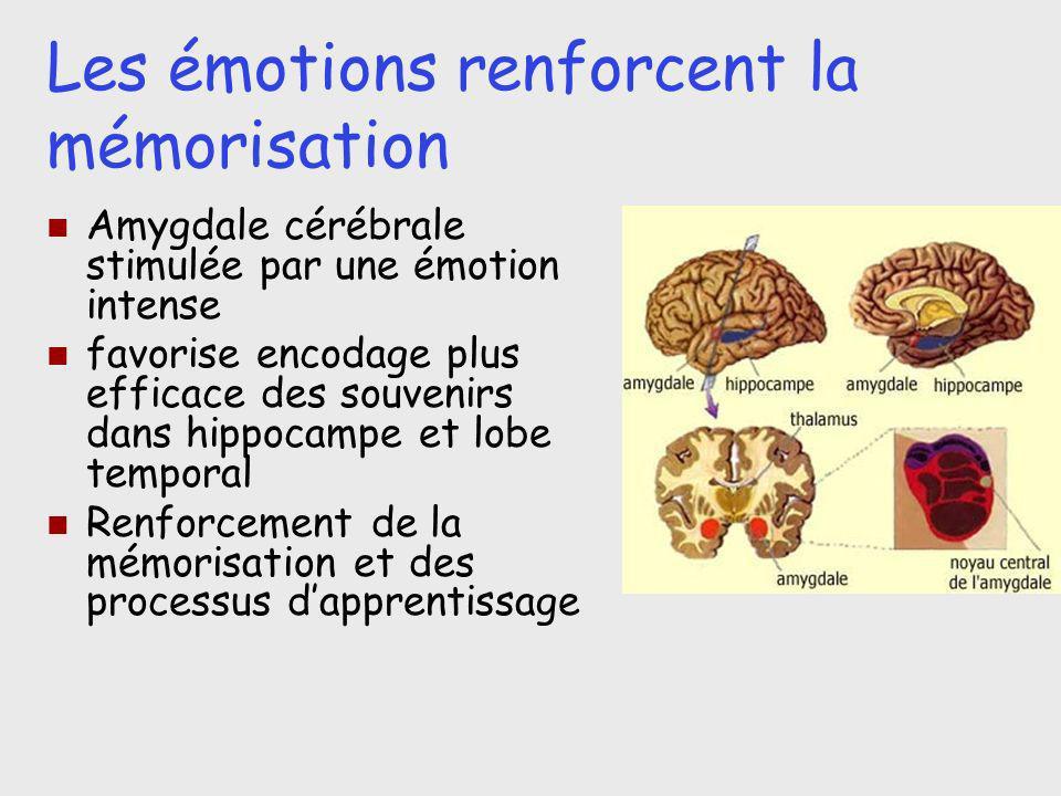 Les émotions renforcent la mémorisation