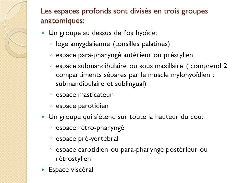 Les espaces profonds sont divisés en trois groupes anatomiques: