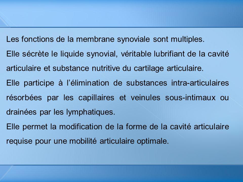 Les fonctions de la membrane synoviale sont multiples.