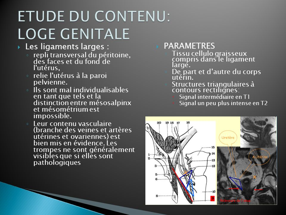 ETUDE DU CONTENU: LOGE GENITALE