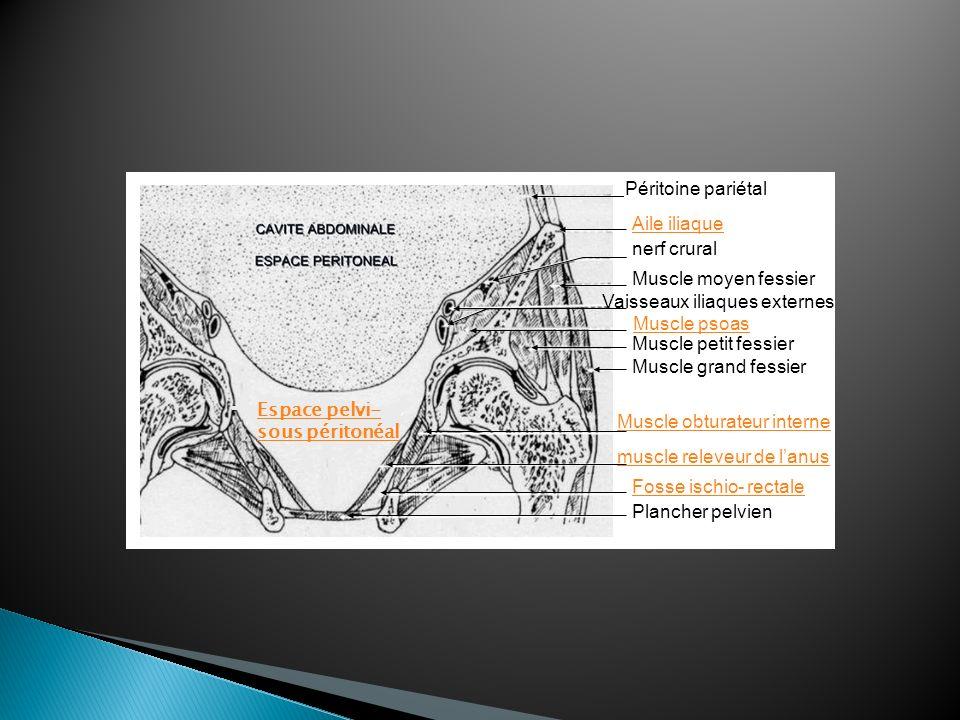 Péritoine pariétalAile iliaque. nerf crural. Muscle moyen fessier. Vaisseaux iliaques externes. Muscle psoas.