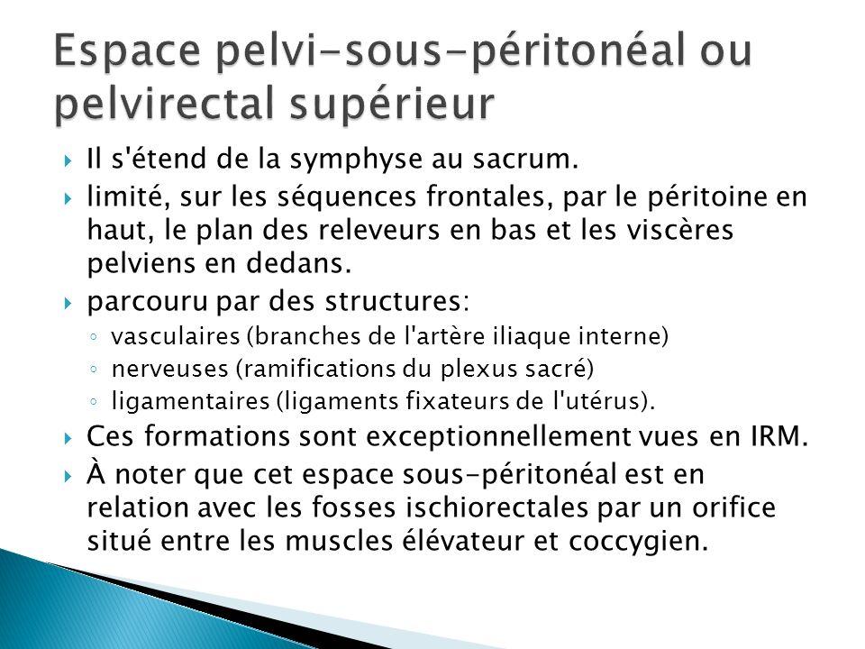 Espace pelvi-sous-péritonéal ou pelvirectal supérieur