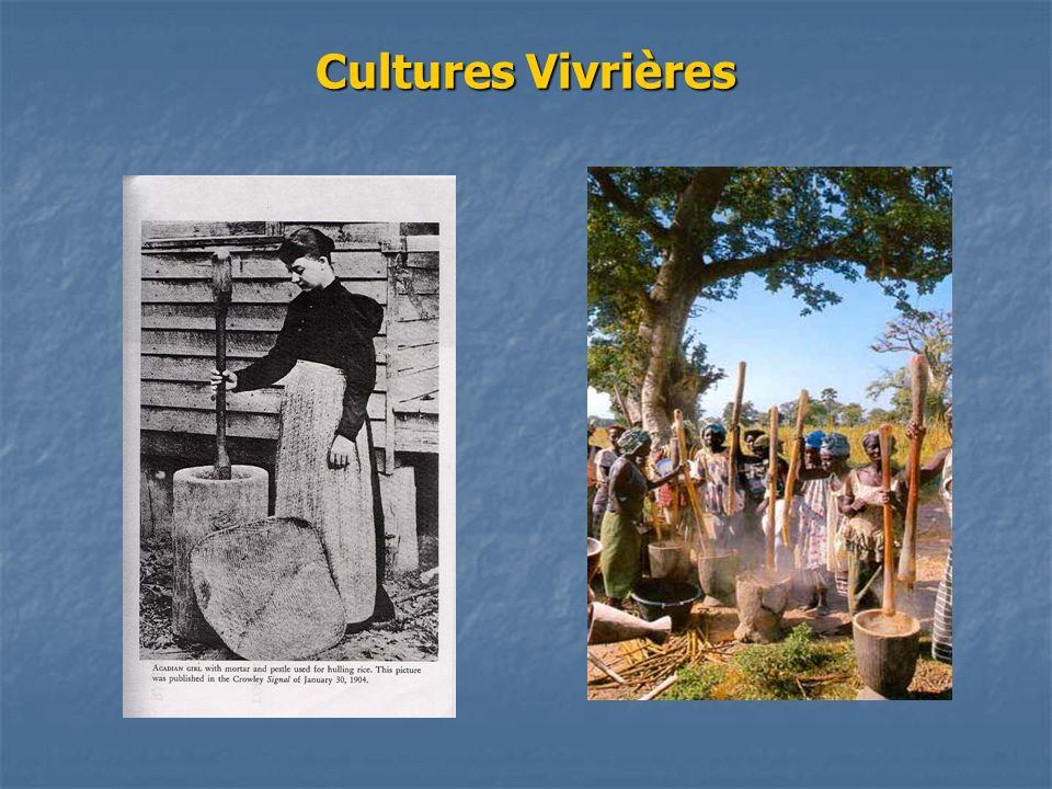Cultures Vivrières