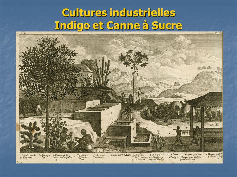 Cultures industrielles Indigo et Canne à Sucre
