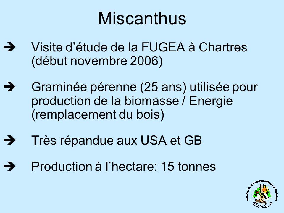 Miscanthus Visite d'étude de la FUGEA à Chartres (début novembre 2006)