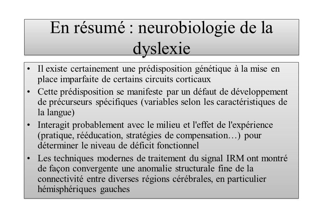 En résumé : neurobiologie de la dyslexie