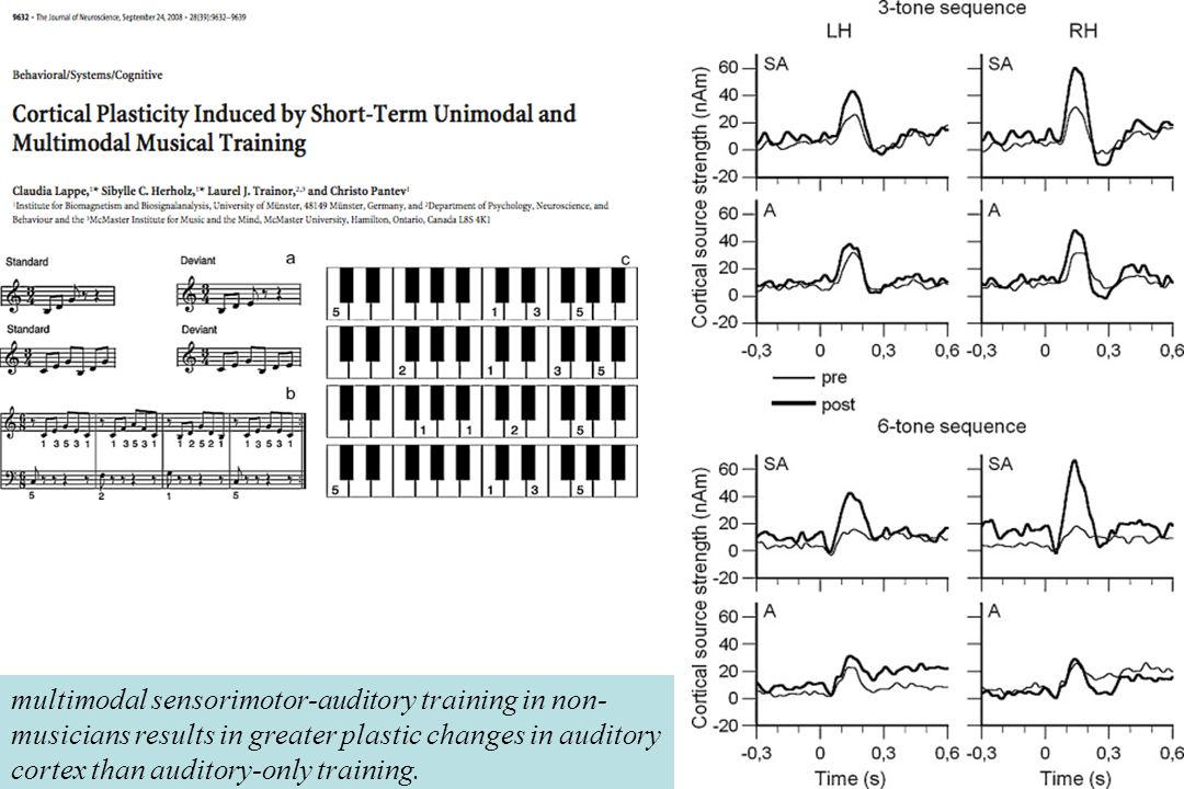 Enregistrement MEG avant et après 2semaines d'entraînement chez deux groupes de non-musiciens :SA sensori-moteur + auditif (clavier) & A auditif seul.