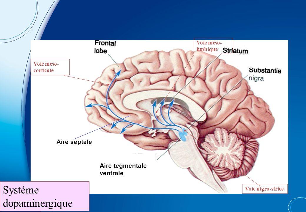 Système dopaminergique