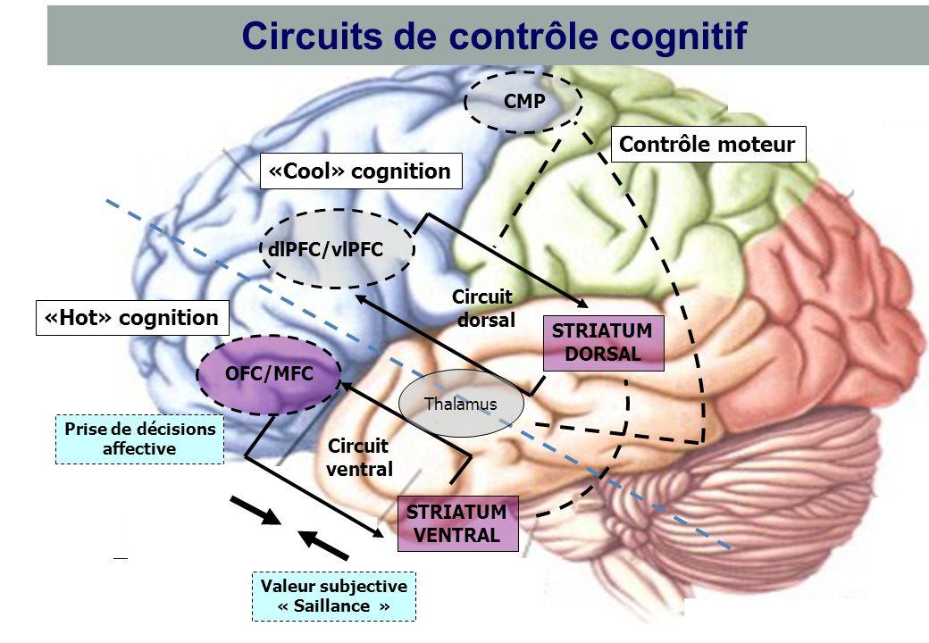 Circuits de contrôle cognitif