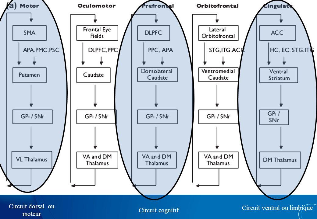 Circuit dorsal ou moteur Circuit ventral ou limbique Circuit cognitif