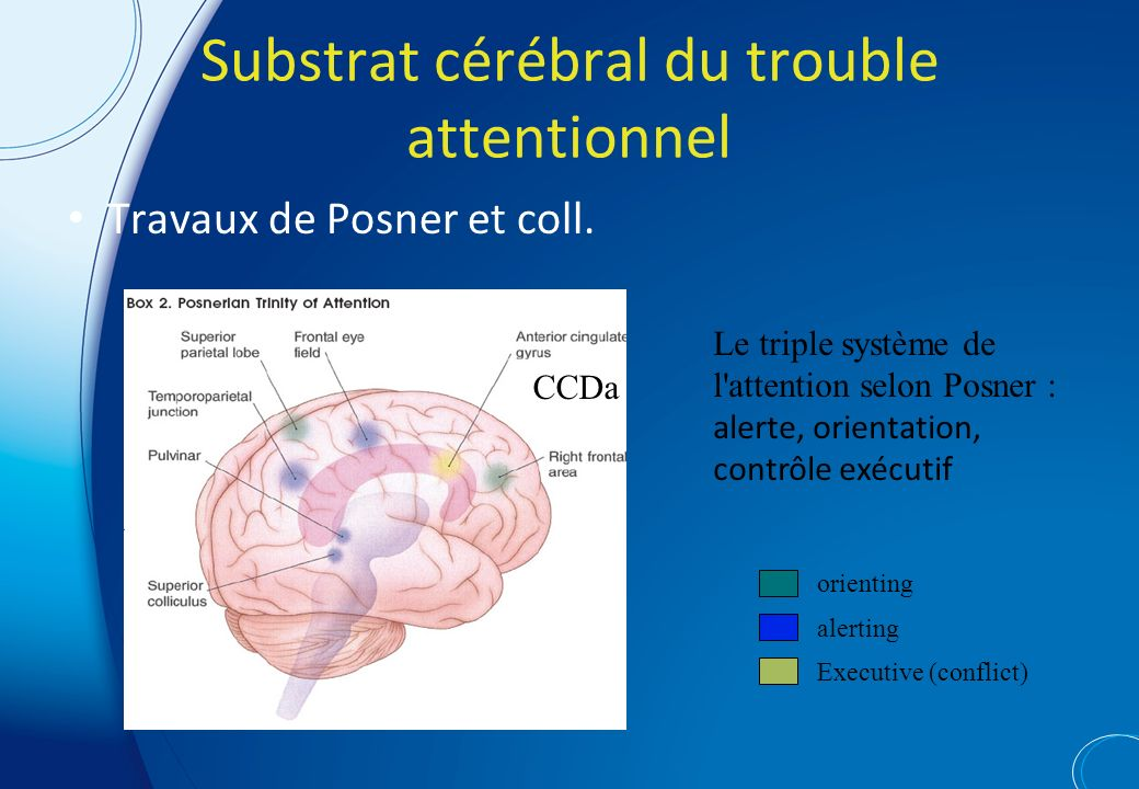Substrat cérébral du trouble attentionnel