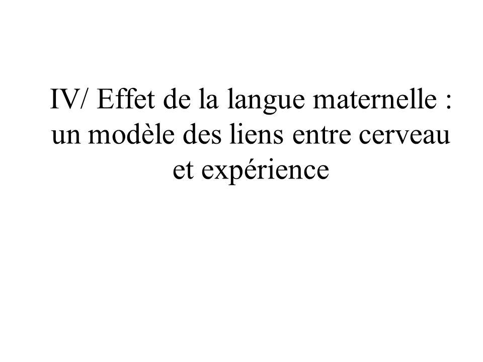 IV/ Effet de la langue maternelle : un modèle des liens entre cerveau et expérience