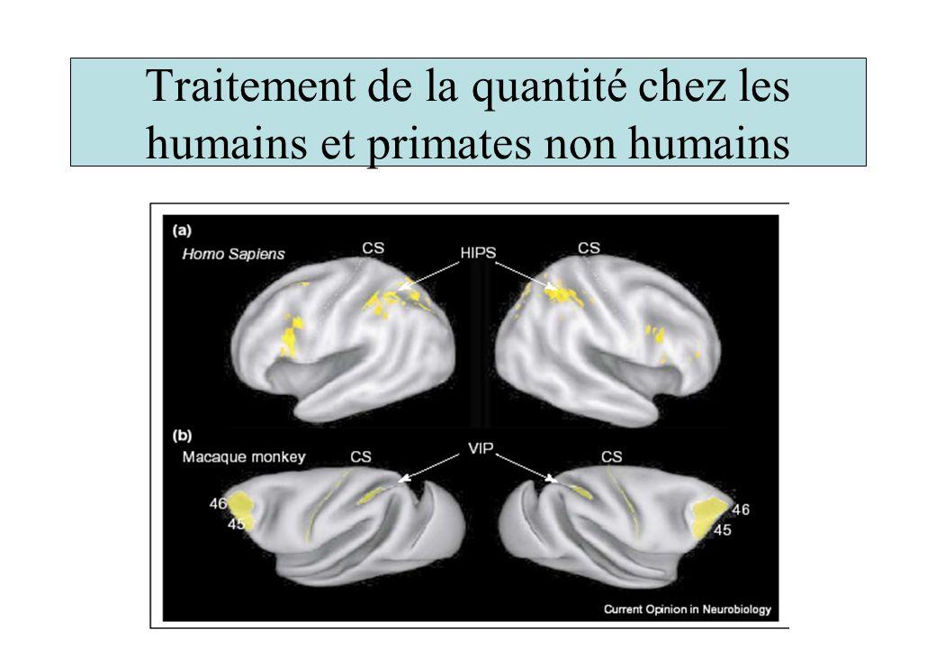 Traitement de la quantité chez les humains et primates non humains