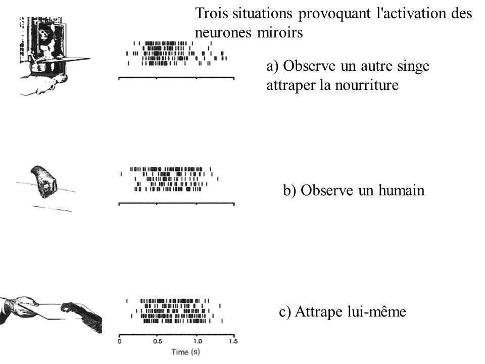Trois situations provoquant l activation des neurones miroirs