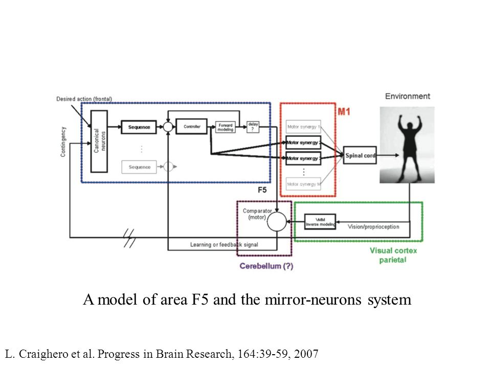 A model of area F5 and the mirror-neurons system