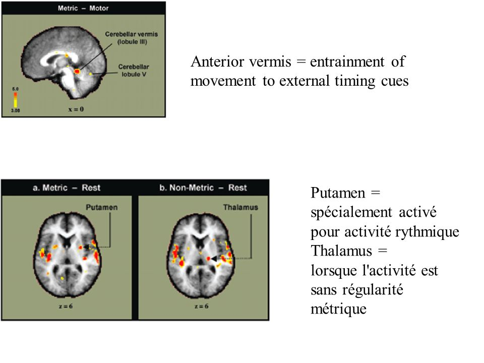 Anterior vermis = entrainment of movement to external timing cues