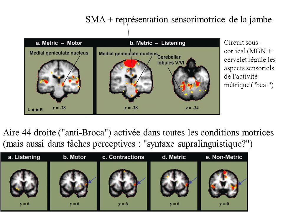 SMA + représentation sensorimotrice de la jambe