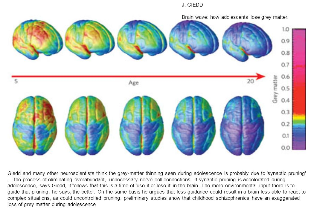 J. GIEDD Brain wave: how adolescents lose grey matter.