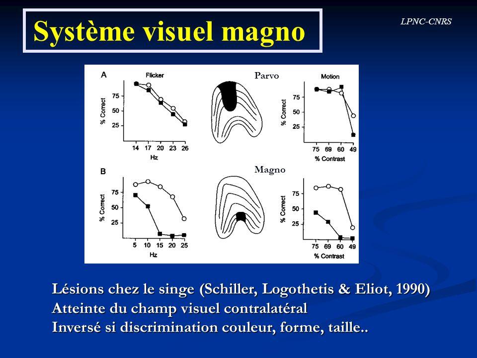 Système visuel magno Parvo. Magno. Lésions chez le singe (Schiller, Logothetis & Eliot, 1990) Atteinte du champ visuel contralatéral.