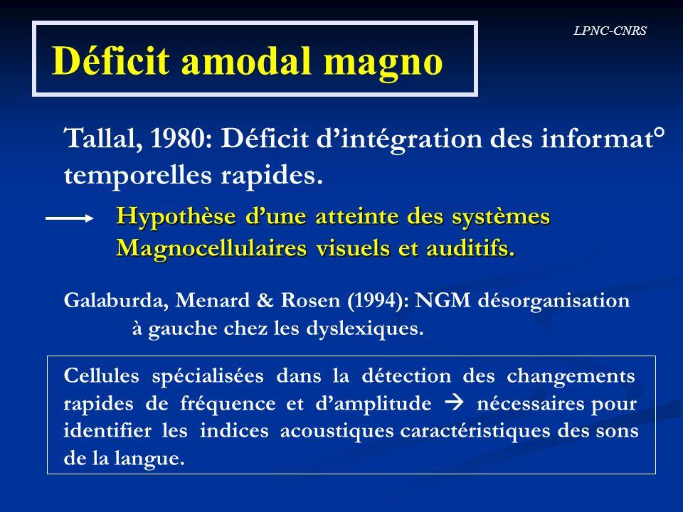 Déficit amodal magno Tallal, 1980: Déficit d'intégration des informat°