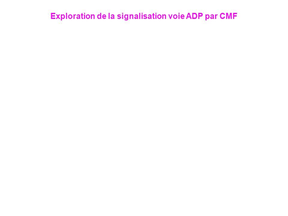 Exploration de la signalisation voie ADP par CMF