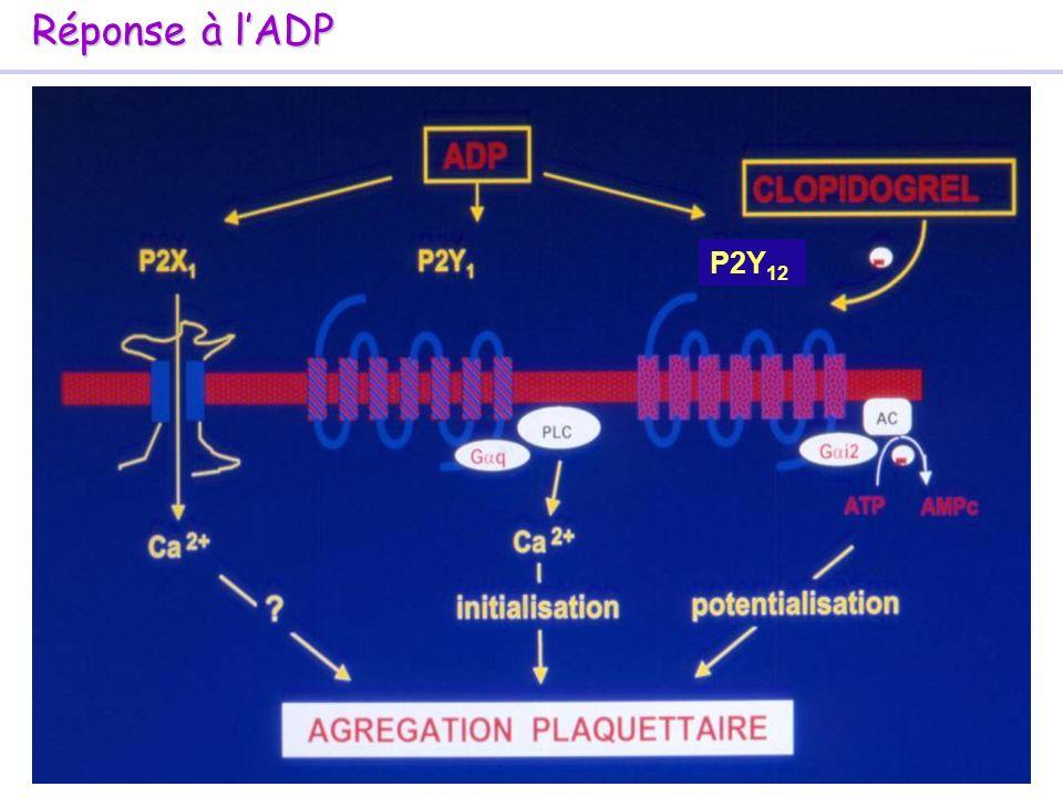 Réponse à l'ADP P2Y12